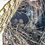 Birds nest in old wreath