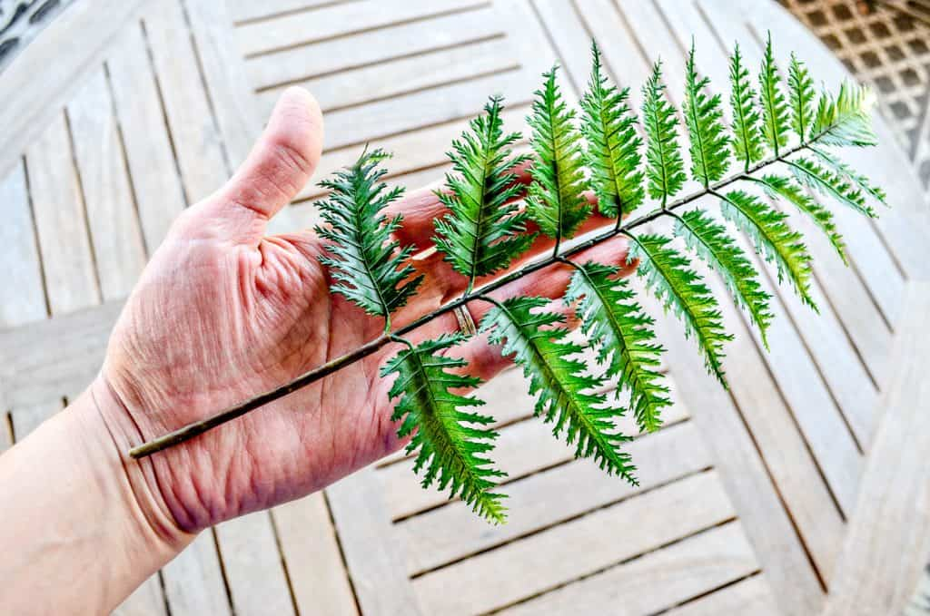 Fern stem for spring wreath made from scratch