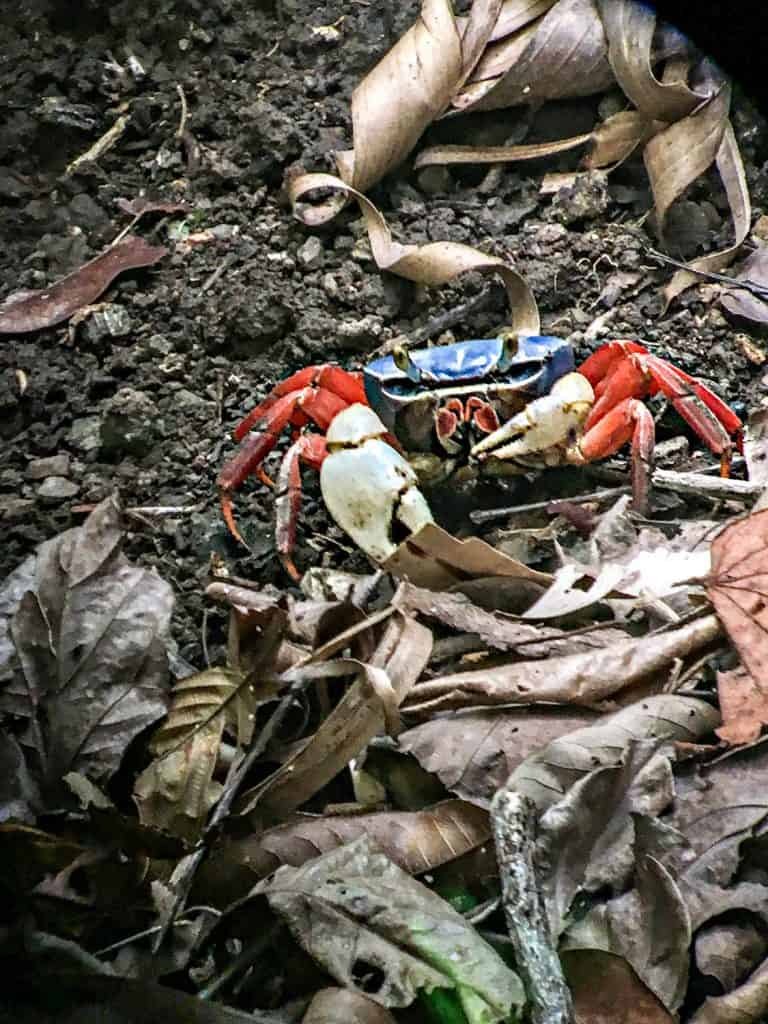 Crab photo taken with scope