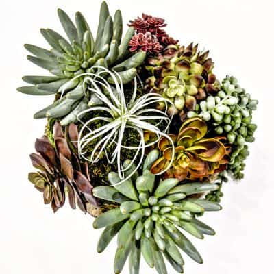 How to arrange faux succulents for DIY floral arrangement used in home decor