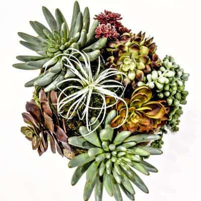 Make the Easiest Faux Succulent Arrangement Ever