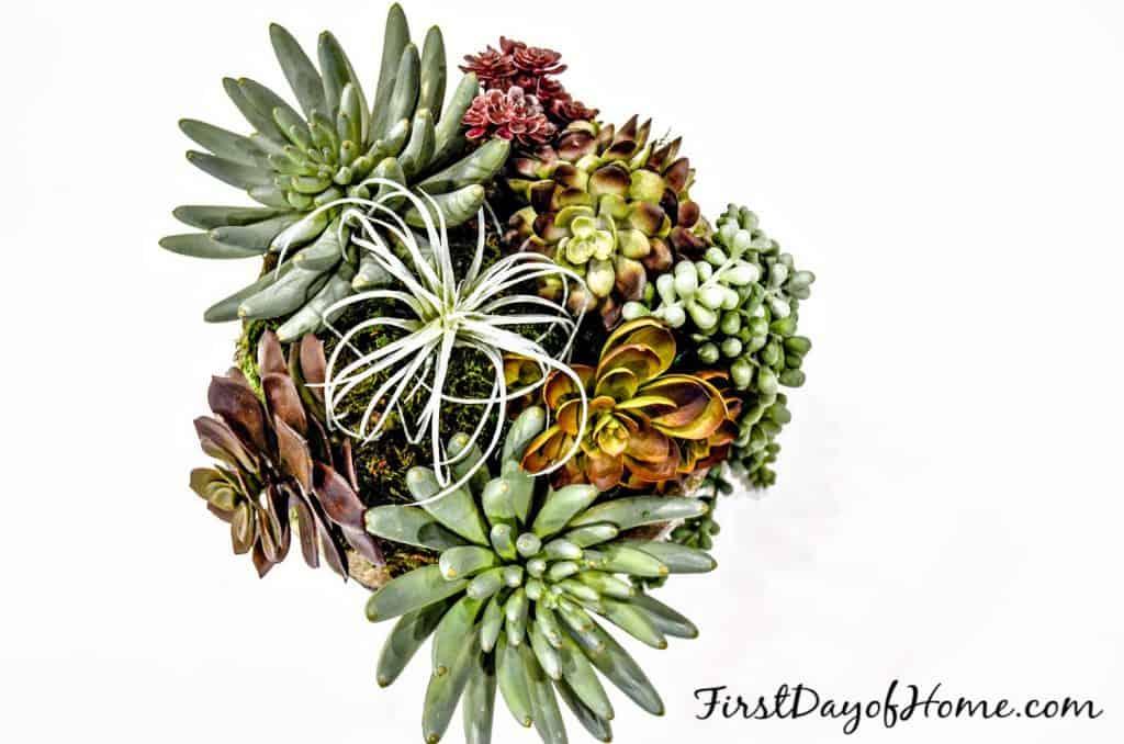 Faux succulent arrangement