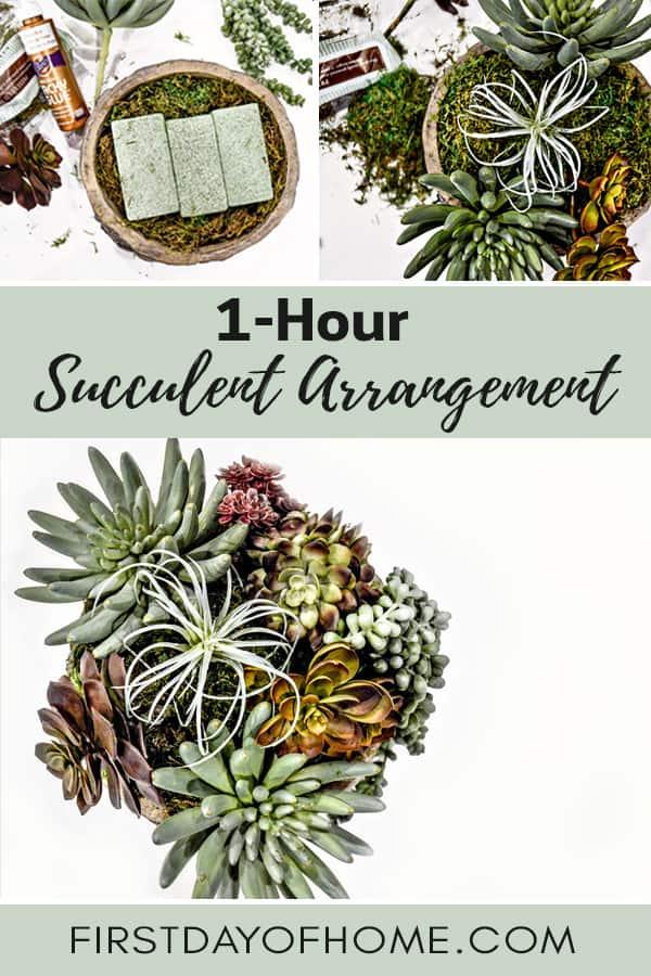 One-Hour Succulent Arrangement Tutorial