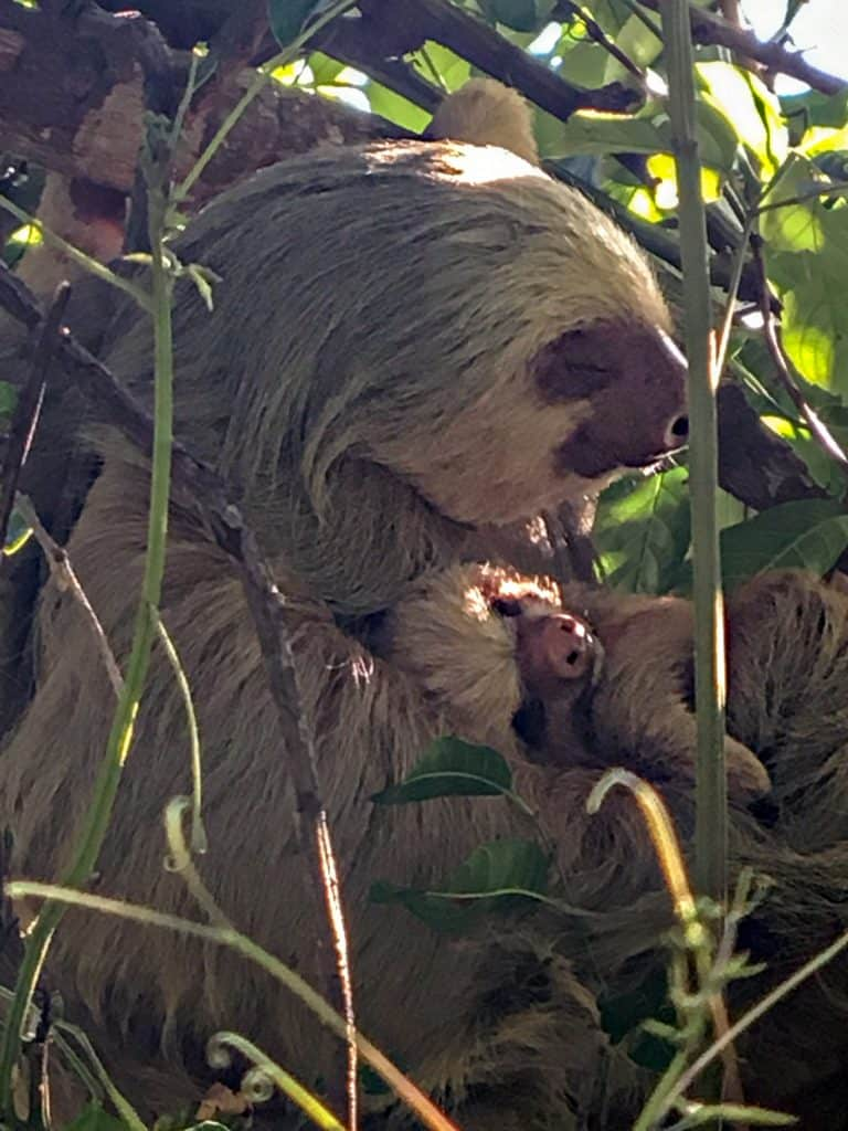 Photo of sloth using Father's Day gift scope recommendation