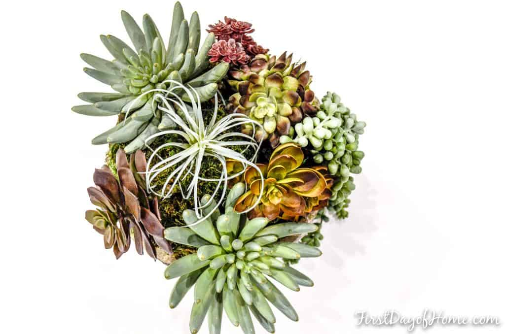 Faux succulent arrangement in planter