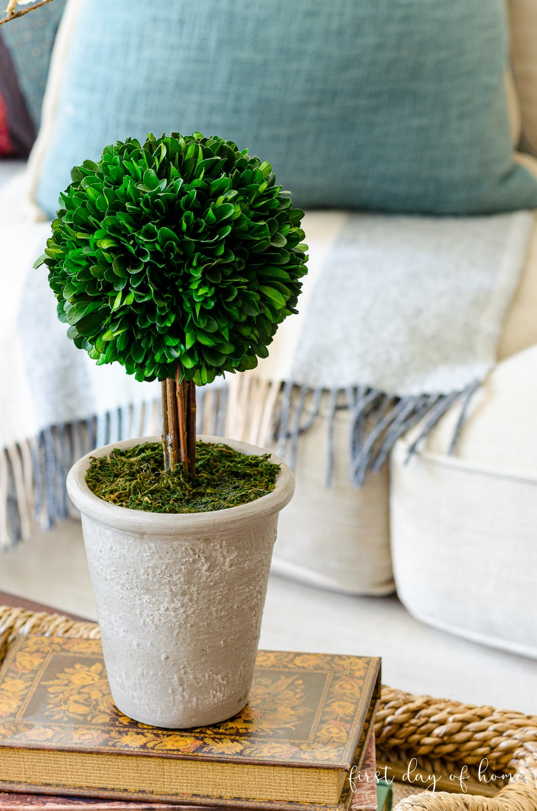 Boxwood topiary sitting on books as part of coffee table tray decor
