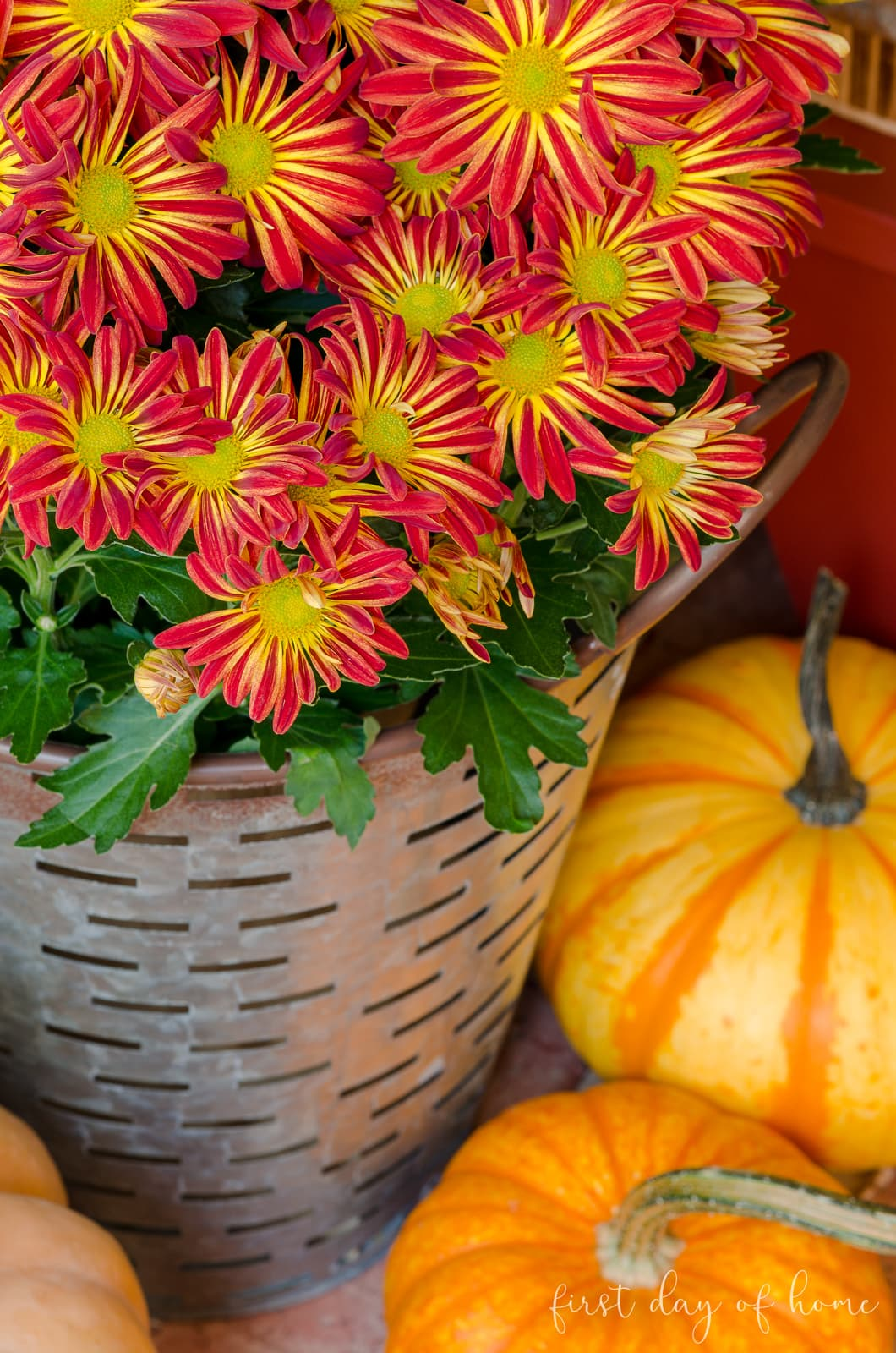 Mums for fall front porch surrounded by small pumpkins