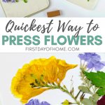 How to make pressed flower art easily and quickly