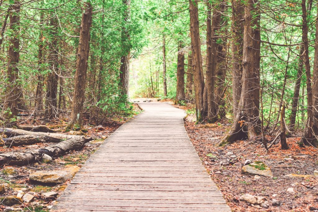 Path through forest for nature walk