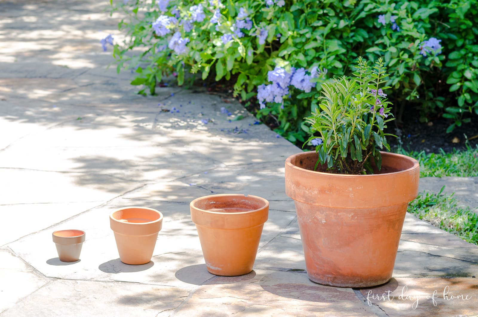 Plain terracotta pots of various sizes before painting
