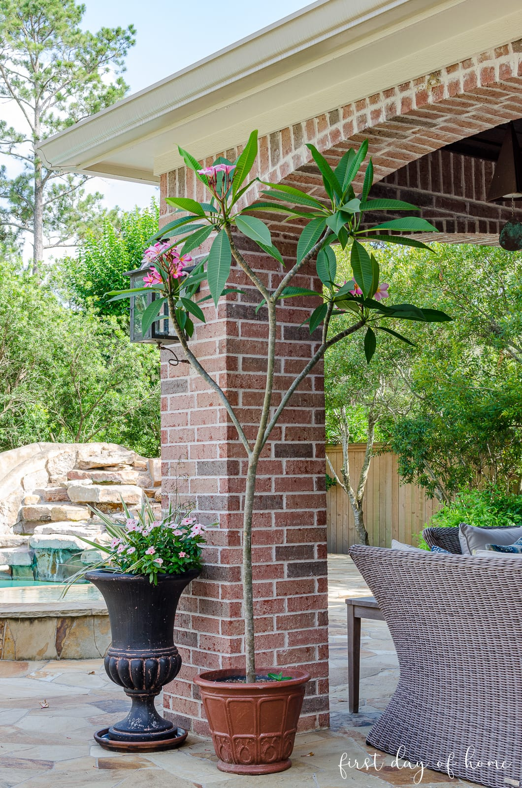 Outdoor patio decor with Singapore plumeria