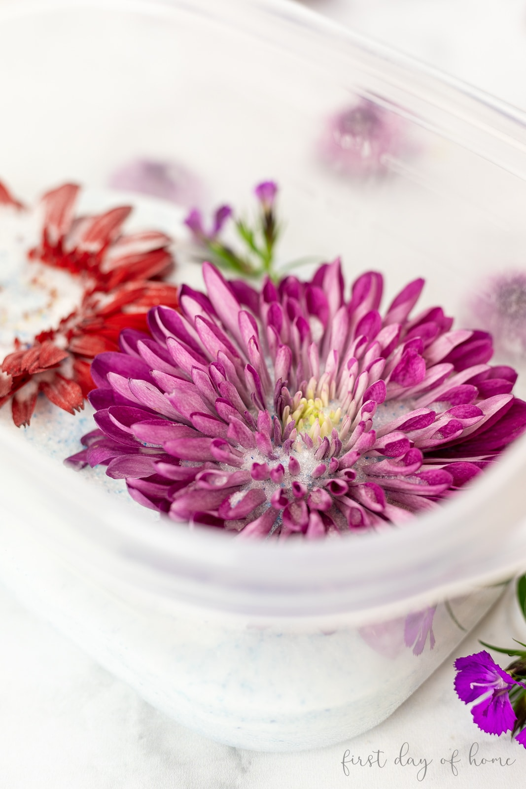 Chrysanthemums and daisies in silica gel for drying flowers
