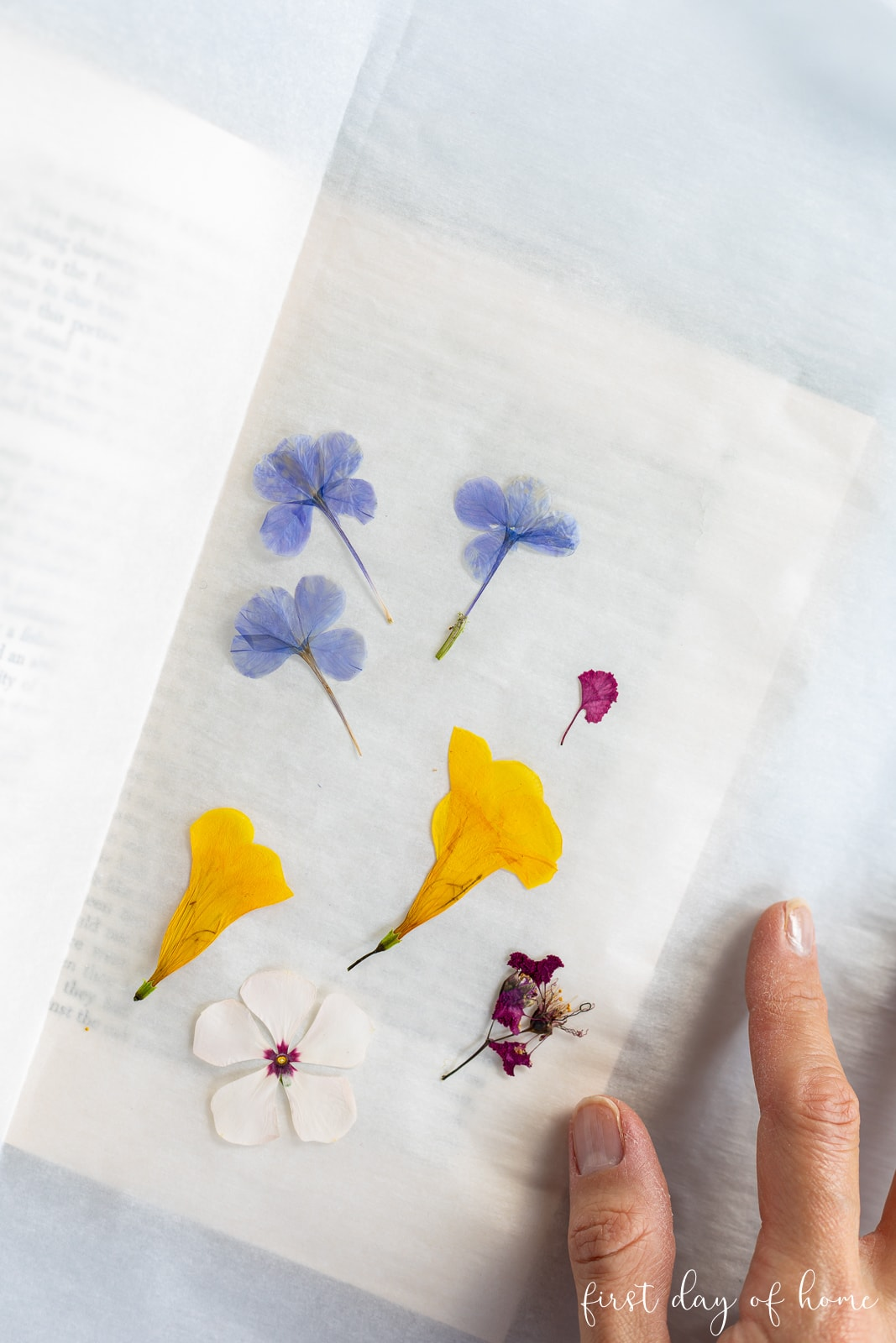 Pressed flowers in a book after 2.5 weeks