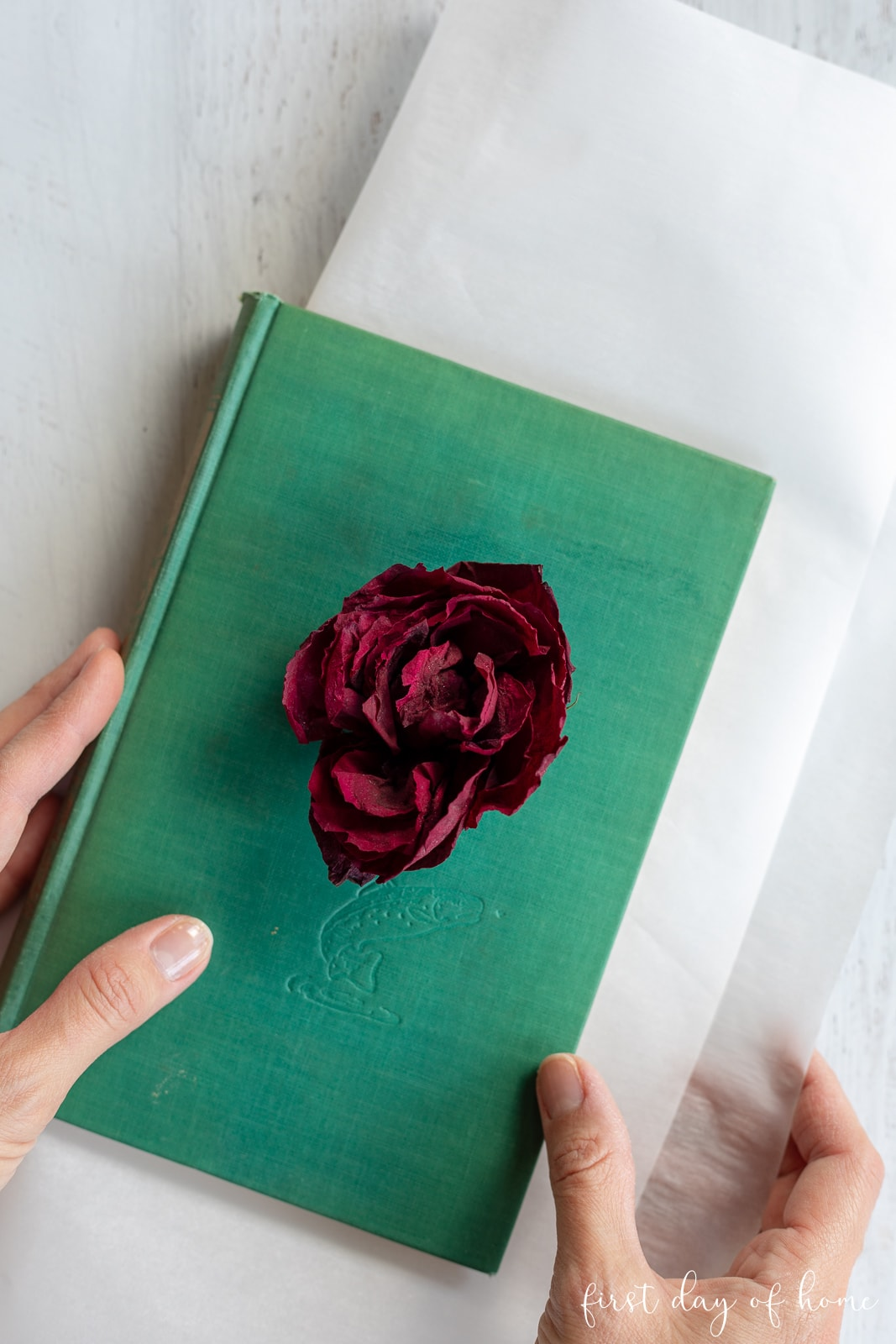 Pressing flowers in a book showing dried rose on top