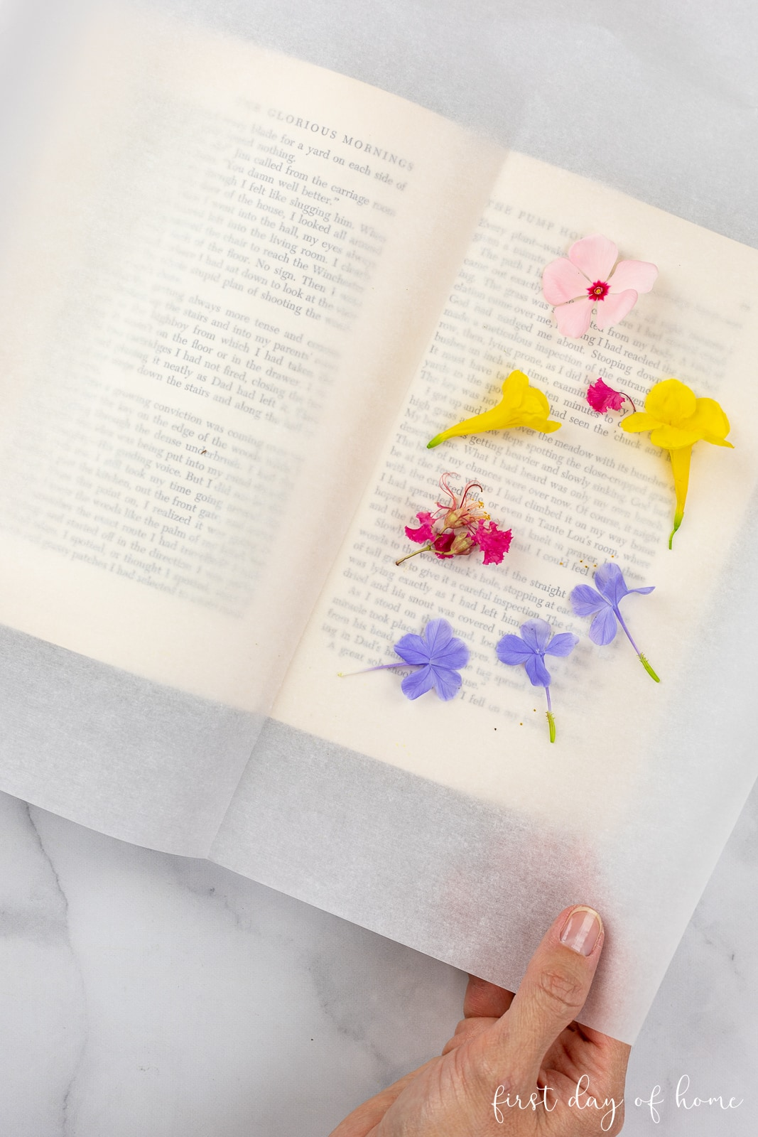 Arranging flowers on parchment paper in a book