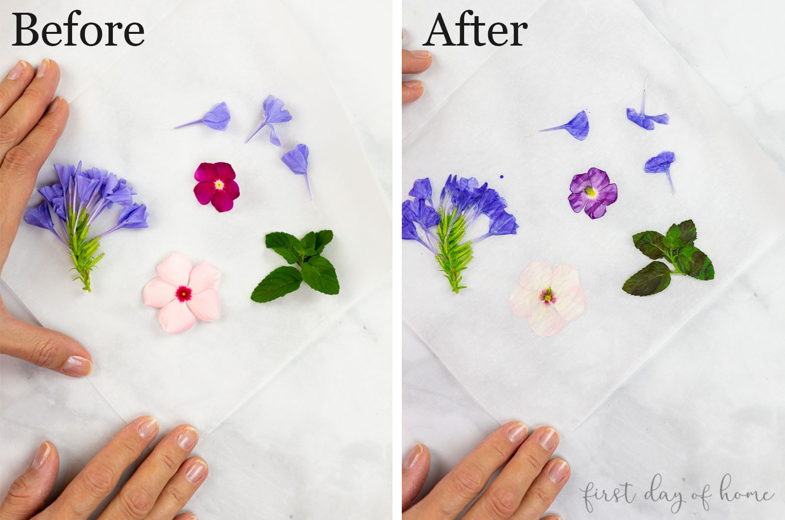Drying flowers with an iron