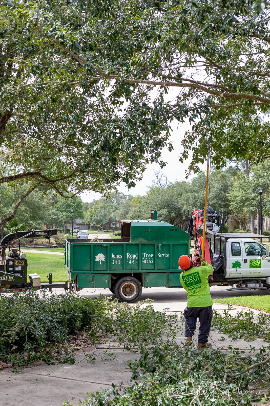 Tree service company trimming oak trees in front yard