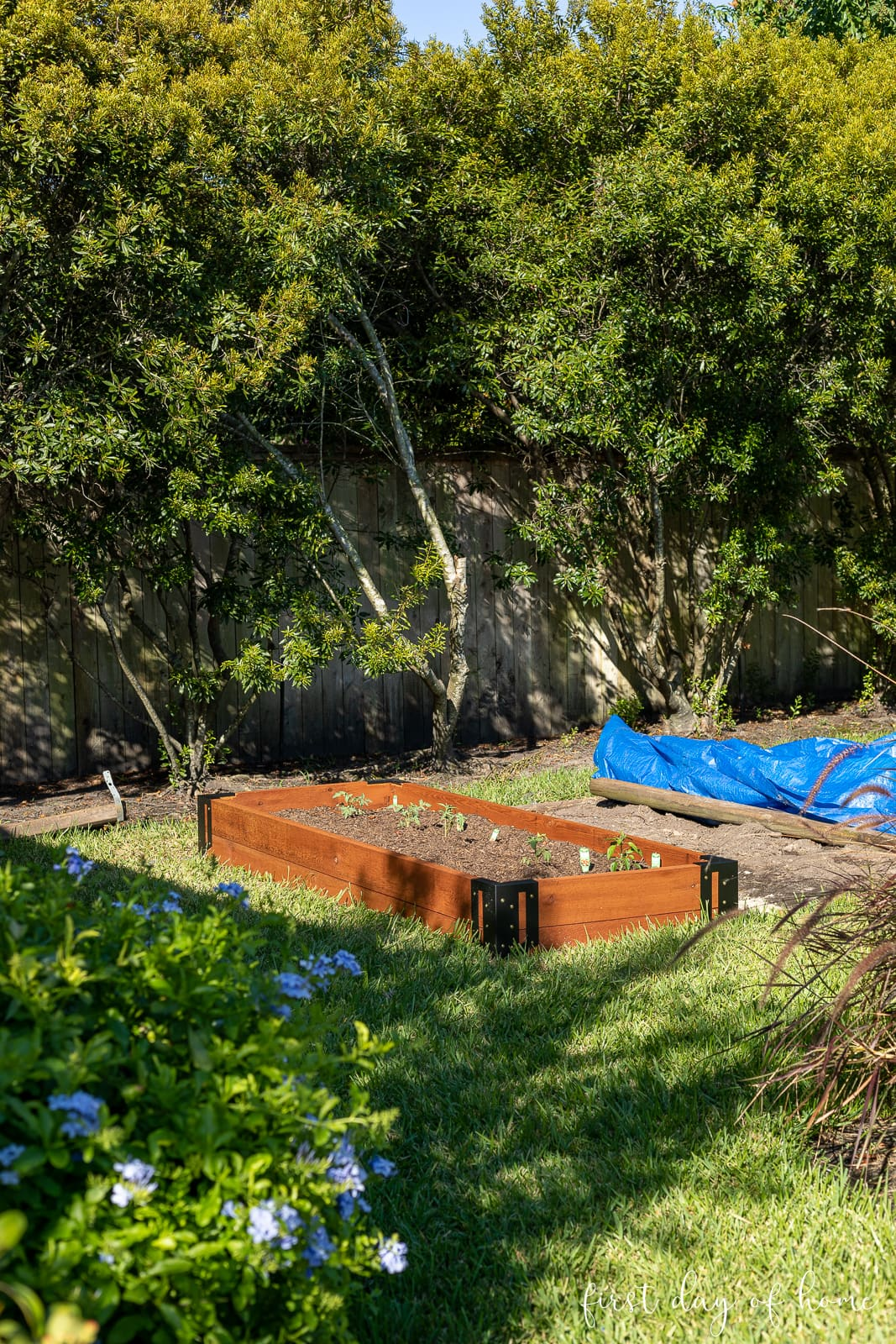 Raised bed garden prepared to plant fall vegetables in Houston, Texas