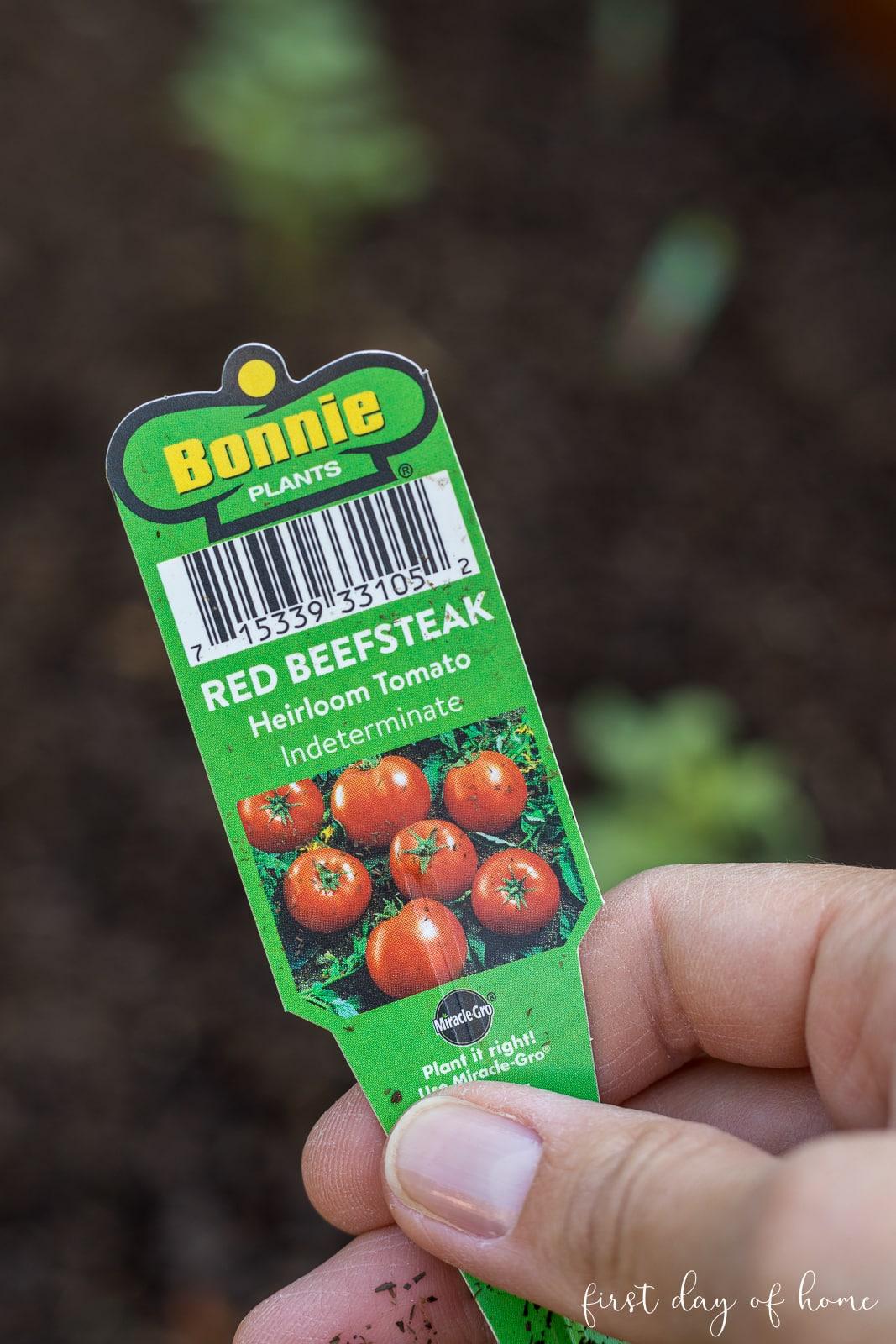 Beefsteak tomato plant information card