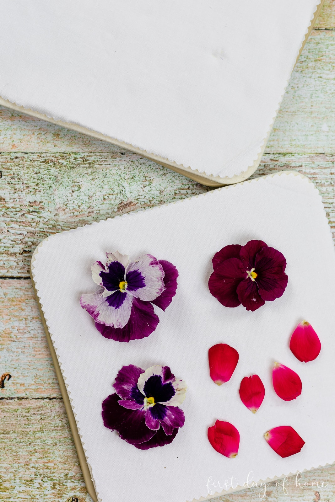 Pansies and rose petals on microwave flower press waiting to be dried