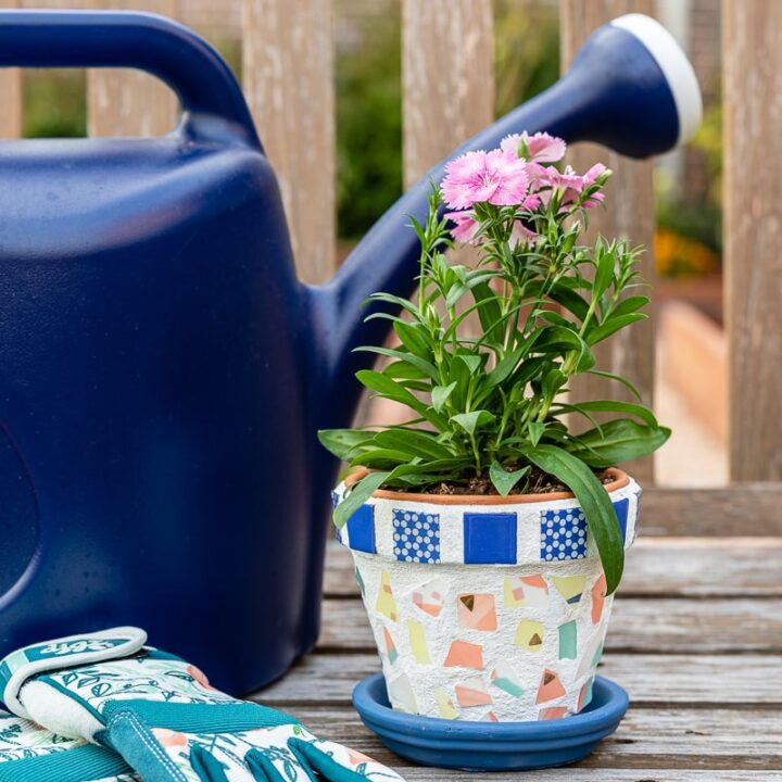 Mosaic flower pot with dianthus flower, a watering can and gardening gloves