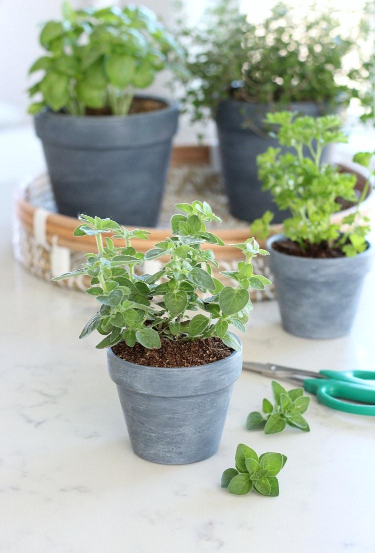 Concrete Painted Herb Pots