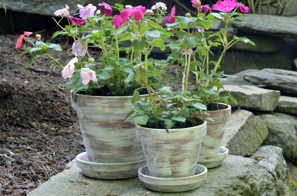 Dry brushed painted terracotta pots with flowers