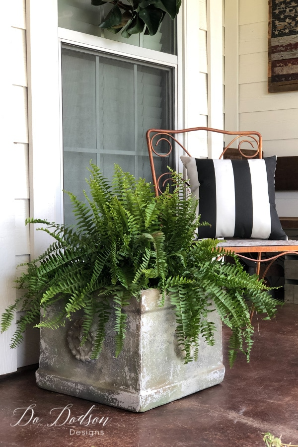 Aged painted terracotta planter that looks like concrete with fern on outdoor patio