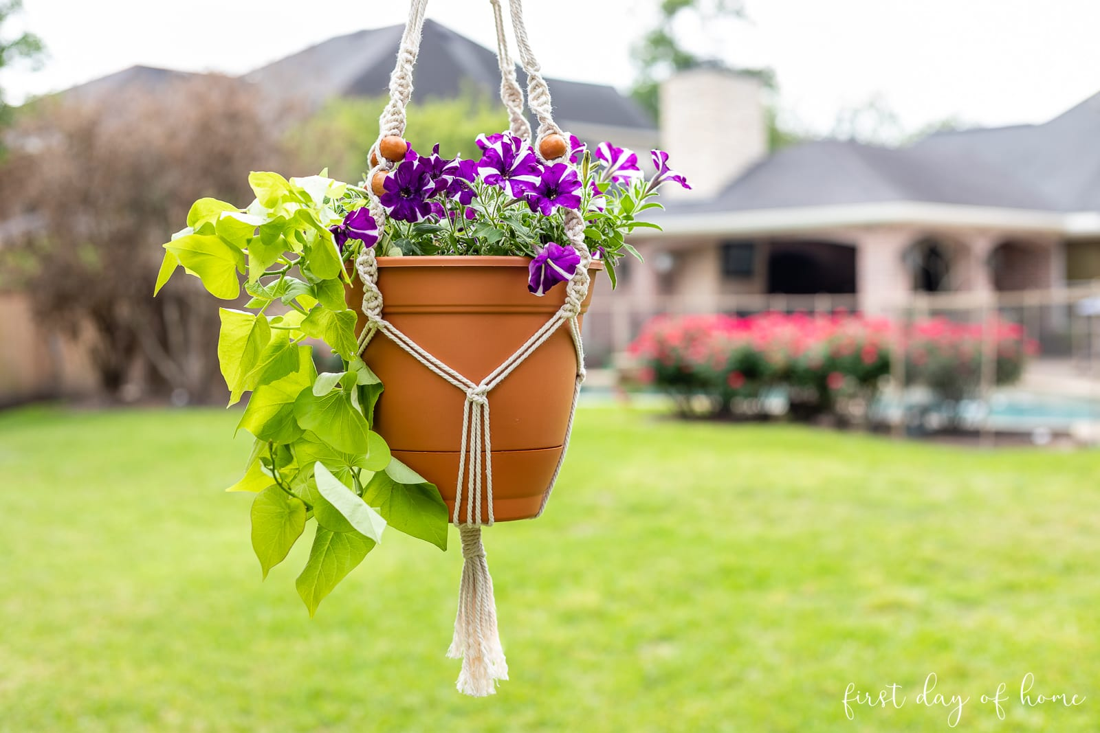 Macrame plant hanger with trailing vine and petunias